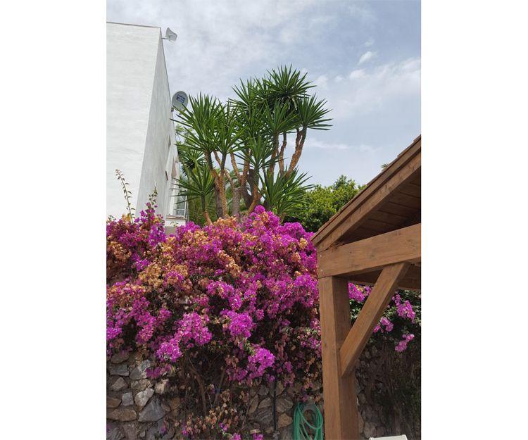 Mantenimiento de jardines en Granada