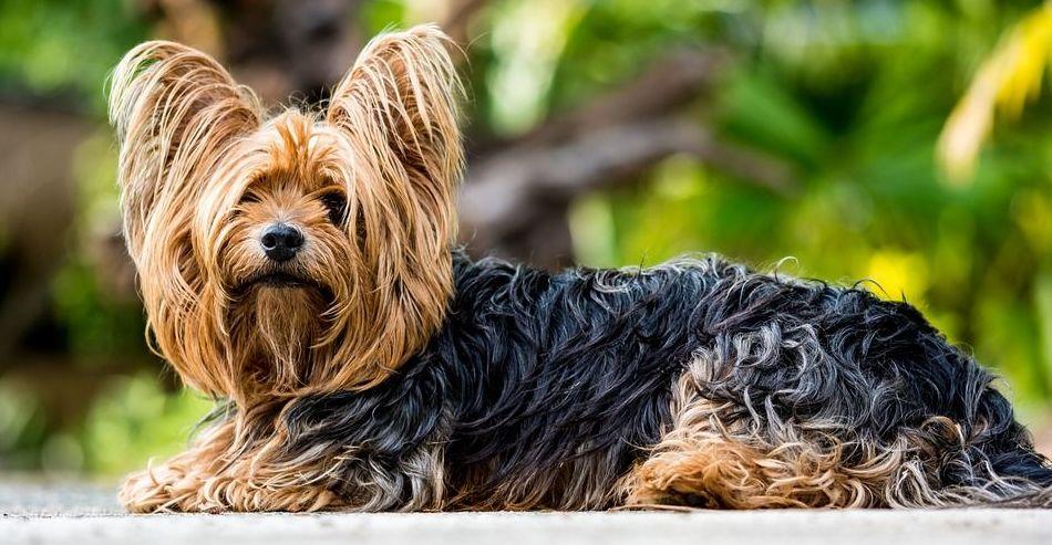 Peluquería canina: Nuestros servicios de Clínica Veterinaria Zoosano