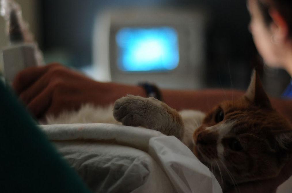 Traumatología : Nuestros servicios de Clínica Veterinaria Zoosano