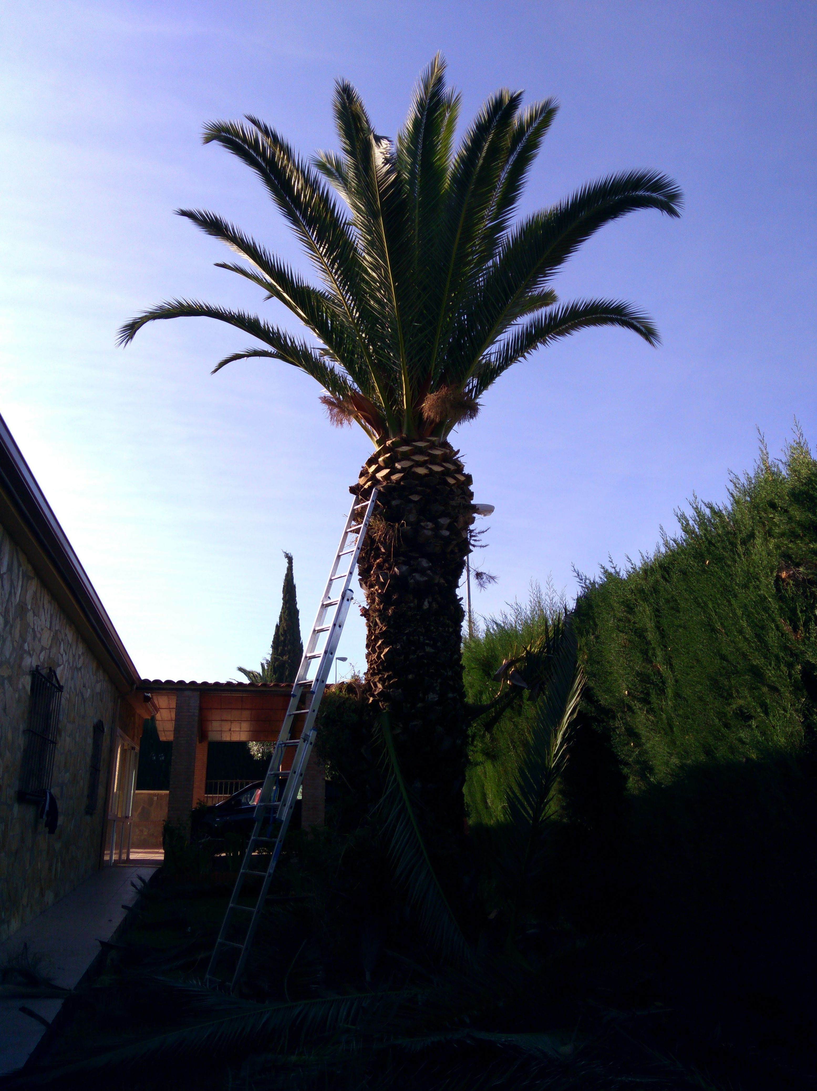 Foto 7 de Diseño y mantenimiento de jardines en Badajoz | Fran Salguero