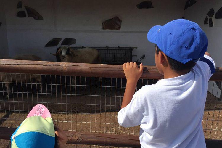 Viaje a granjas con el colegio