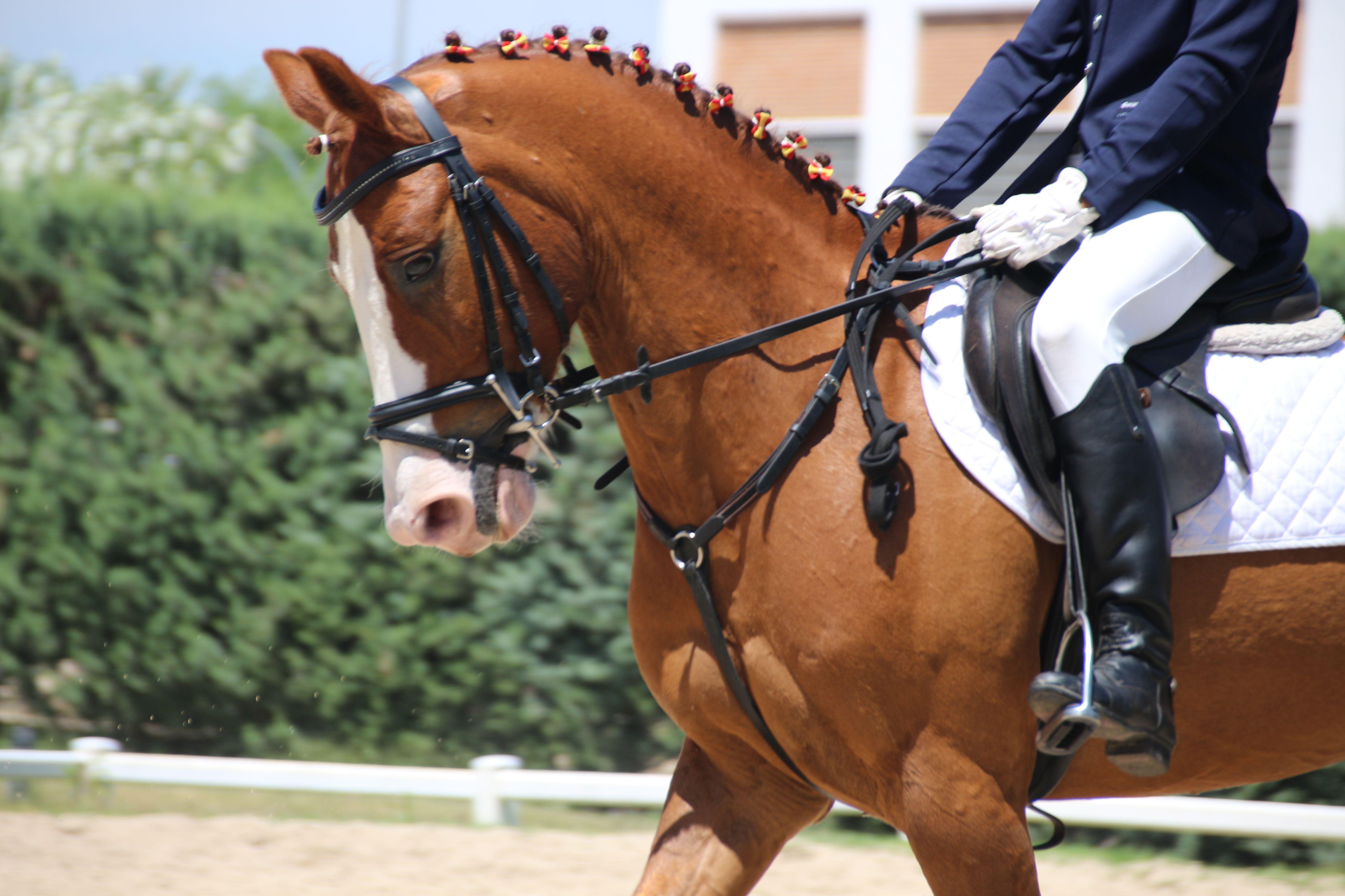 Montar a caballo Madrid