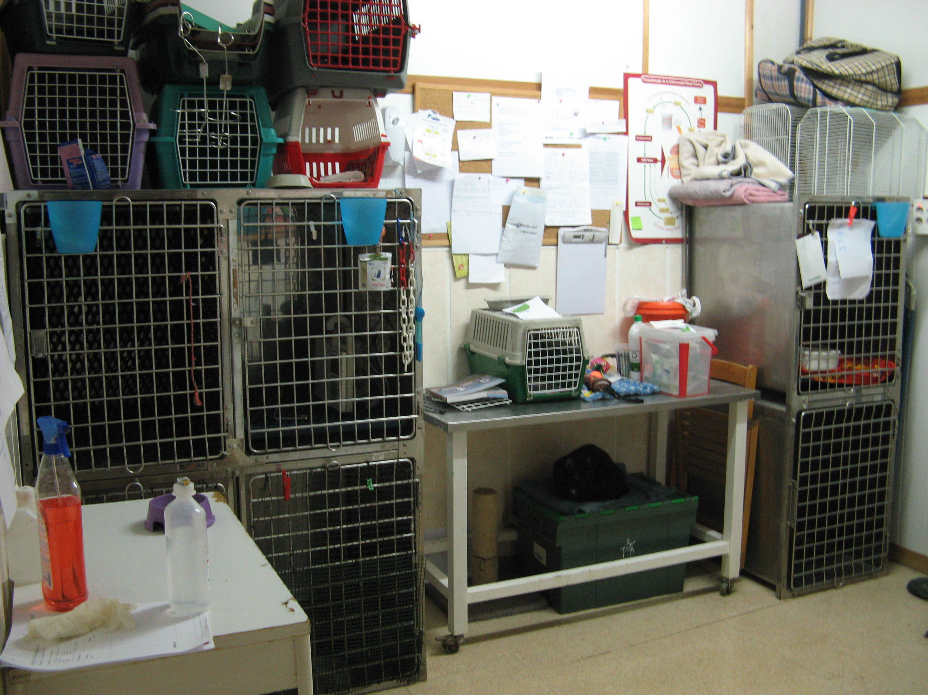 Foto 9 de Clínica veterinaria en Sabadell   Gos i Gat clínica veterinària sl