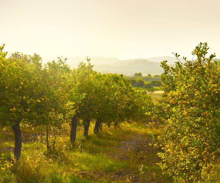 Productores de frutas, verduras y hortalizas en Alicante