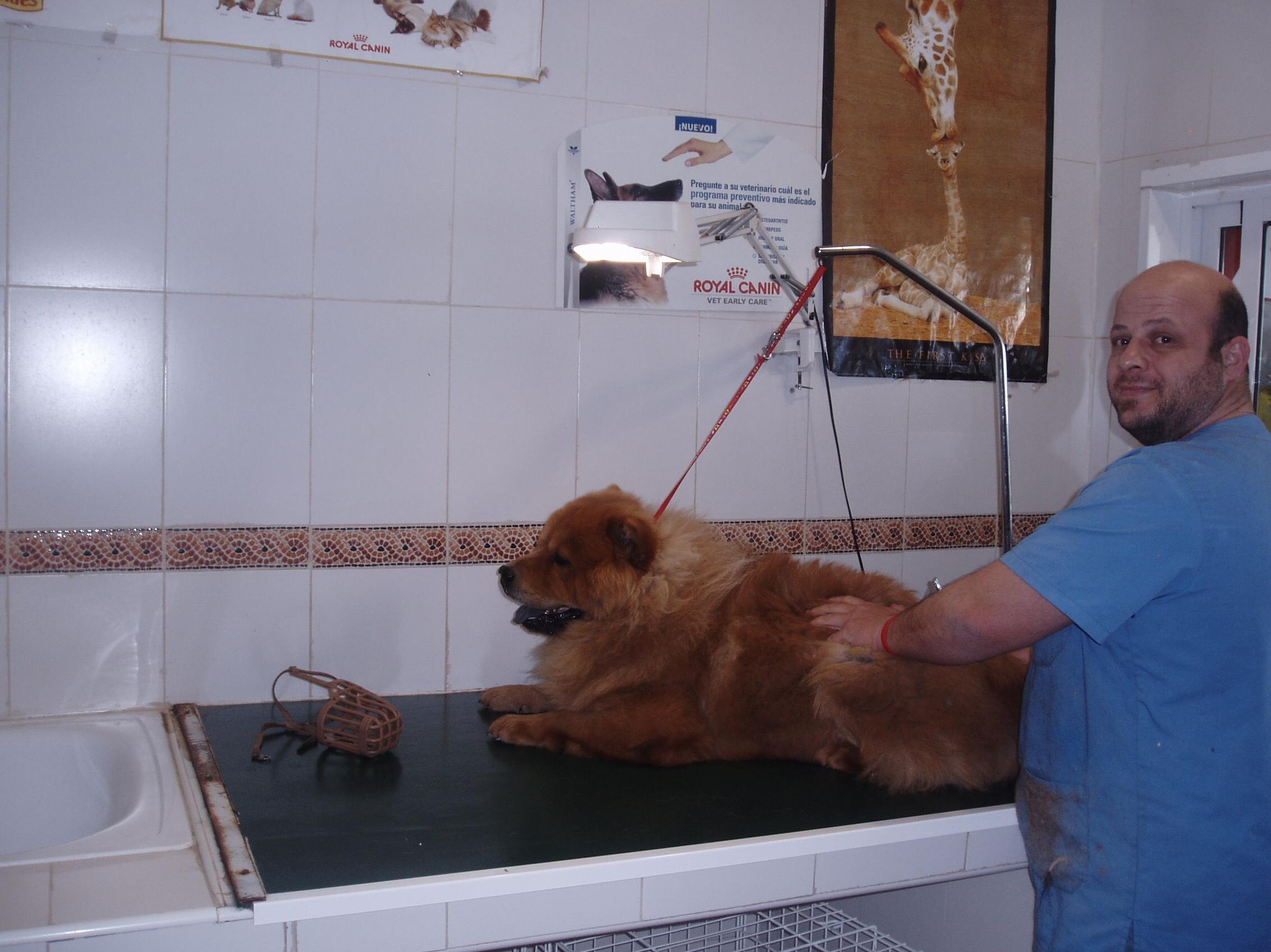 servicio peluqeria, Julio, responsable de el estilismo de su mascota