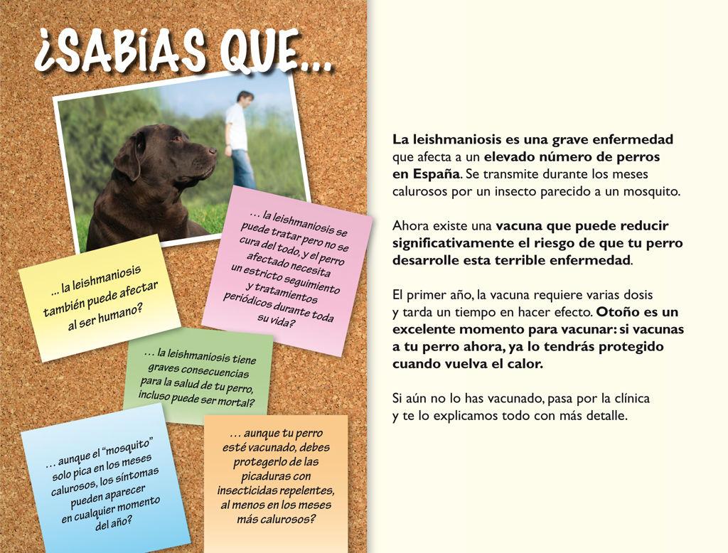 Foto 14 de Veterinarios en San Isidro-Níjar | Clínica Veterinaria Campo de Níjar