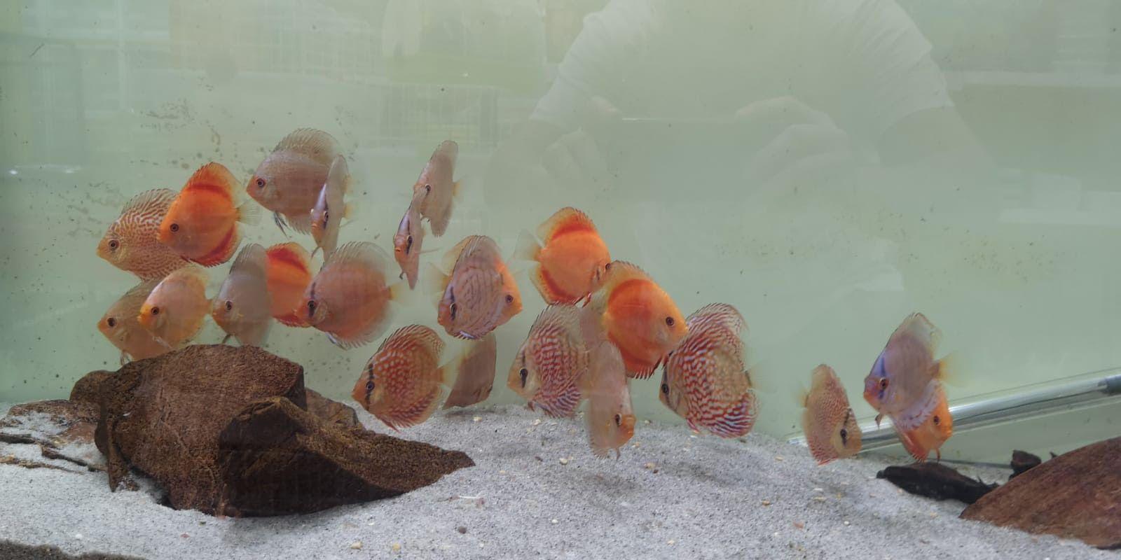 Foto 1 de Tienda de animales en    Amazonas 1