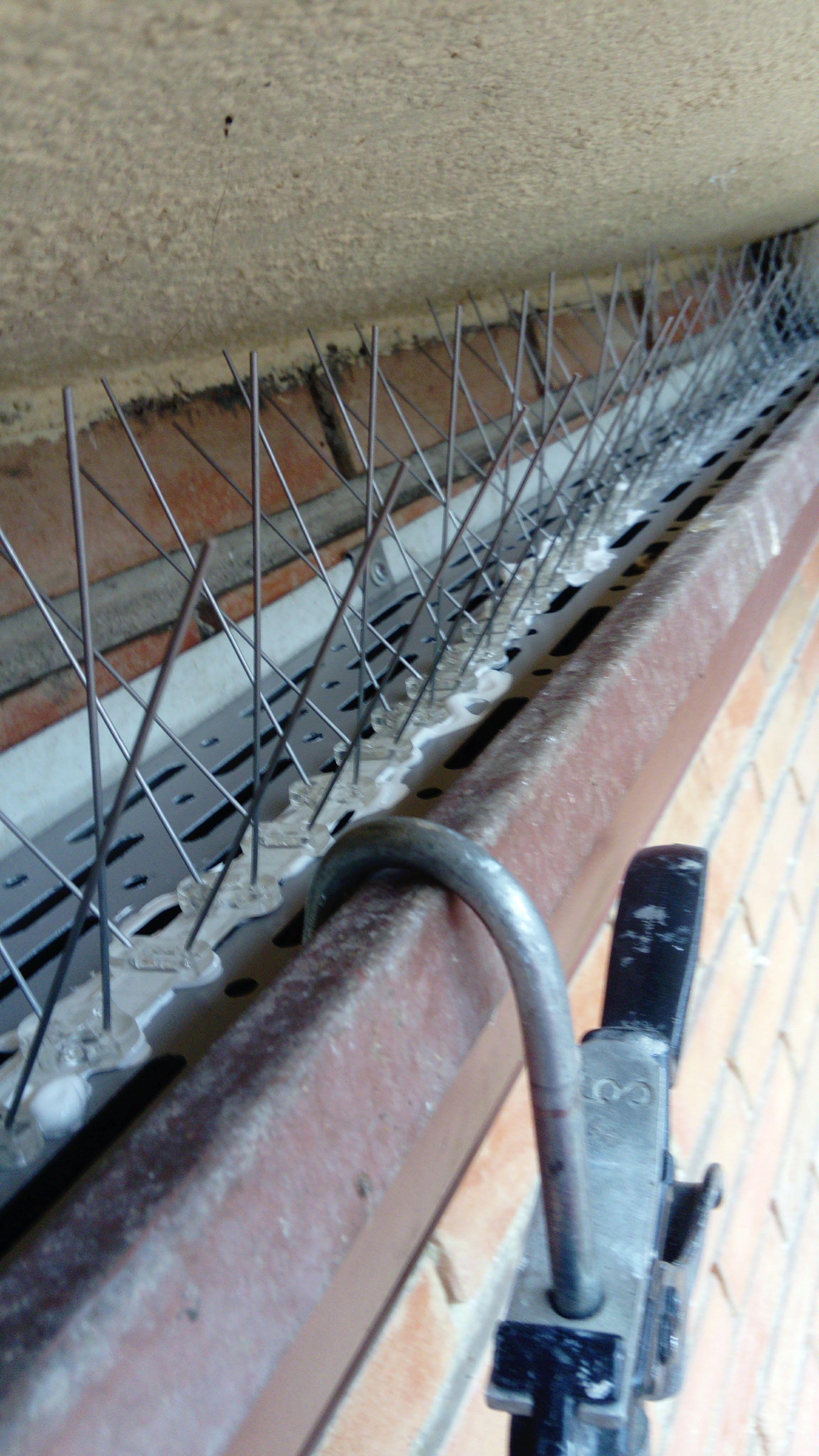 Solución a problemas por las aguas pluviales
