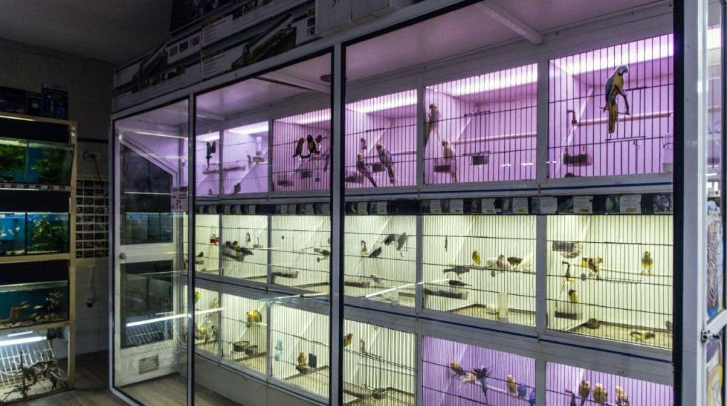 Foto 10 de Tienda de animales en Paterna | Zoolandia