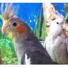 Accesorios aves y pequeños roedores: Productos y servicios de Zoolandia