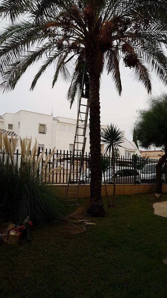 Poda de arboles en Almería
