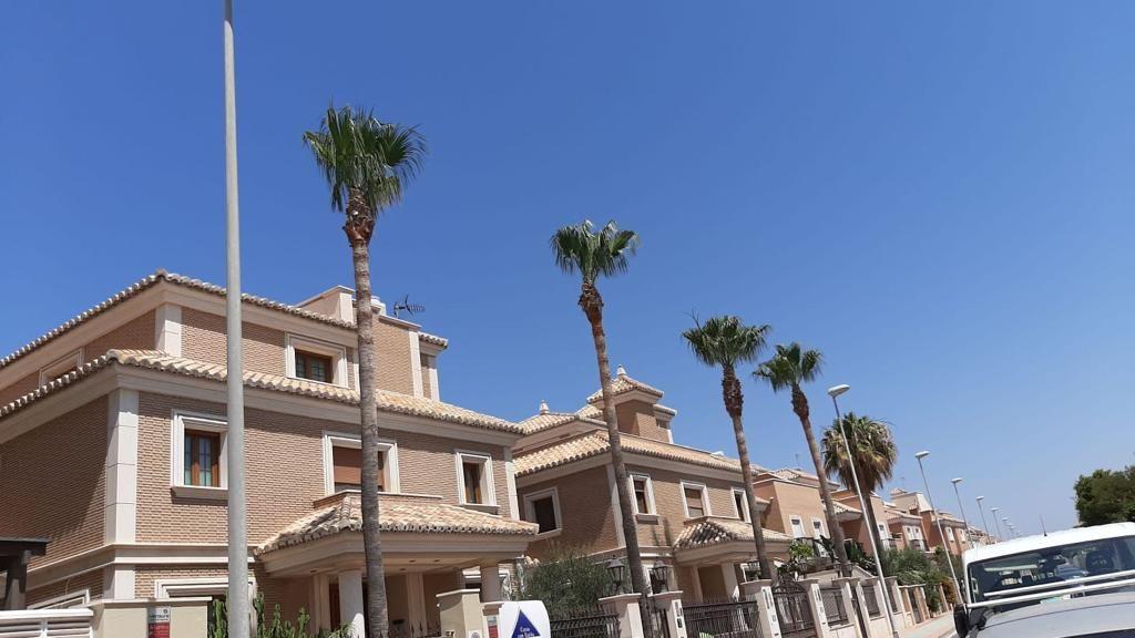 Poda y limpieza de palmeras de más de 10 metros de tronco