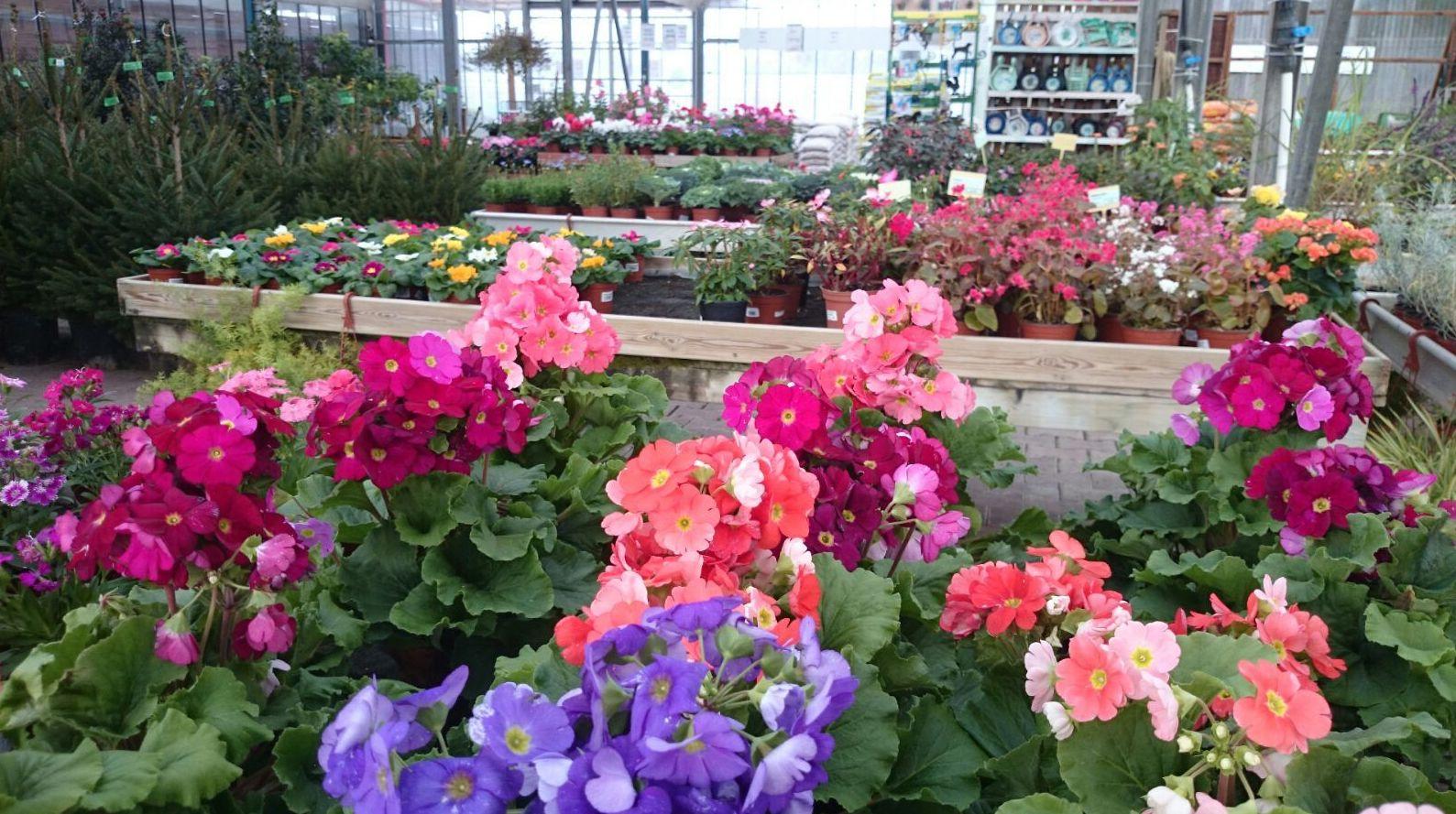 A Mercajardí comptem amb tècnics especialistes en Jardineria