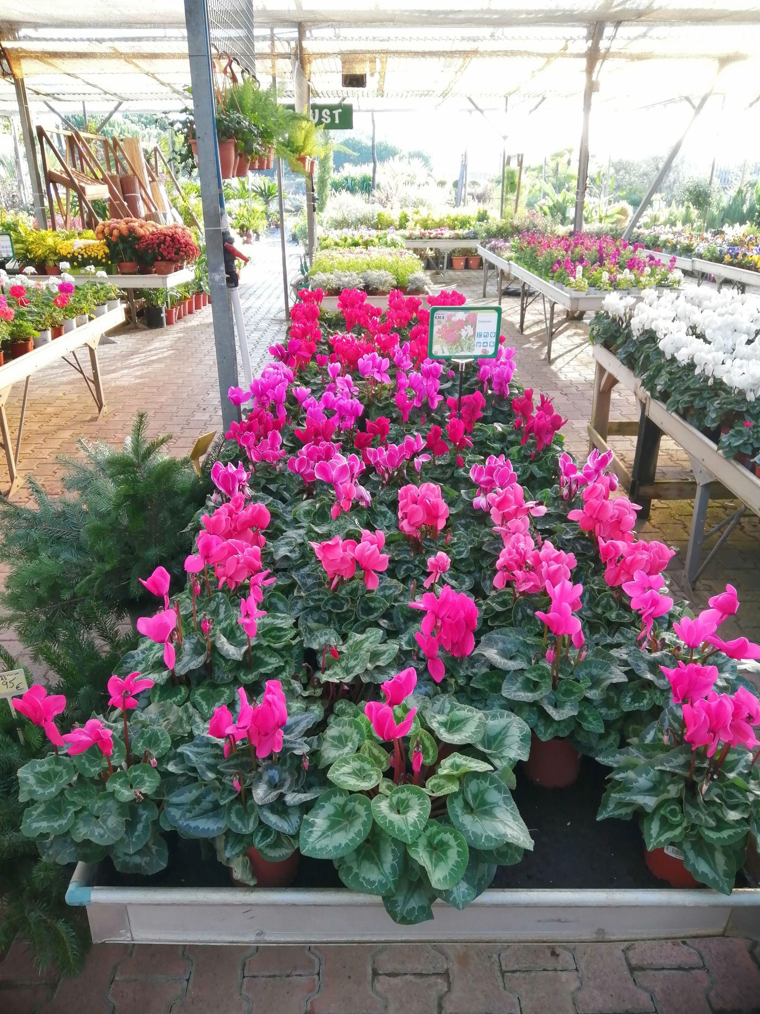 Foto 8 de Excellent range of products for all kinds of gardens en Castelló d'Empúries   Mercajardí