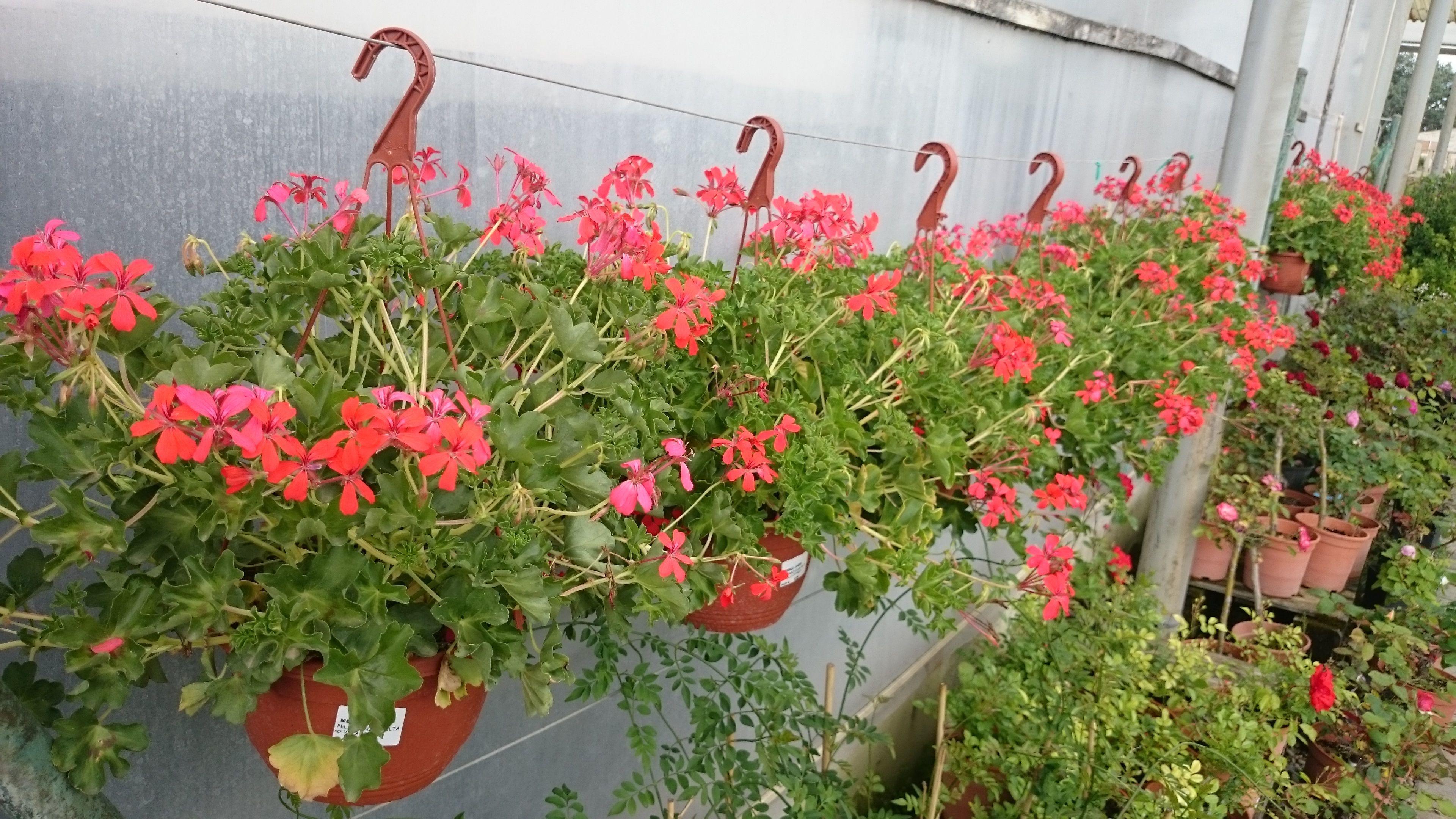 Foto 3 de Excelente surtido en productos para todo tipo de jardines en Castelló d'Empúries | Mercajardí
