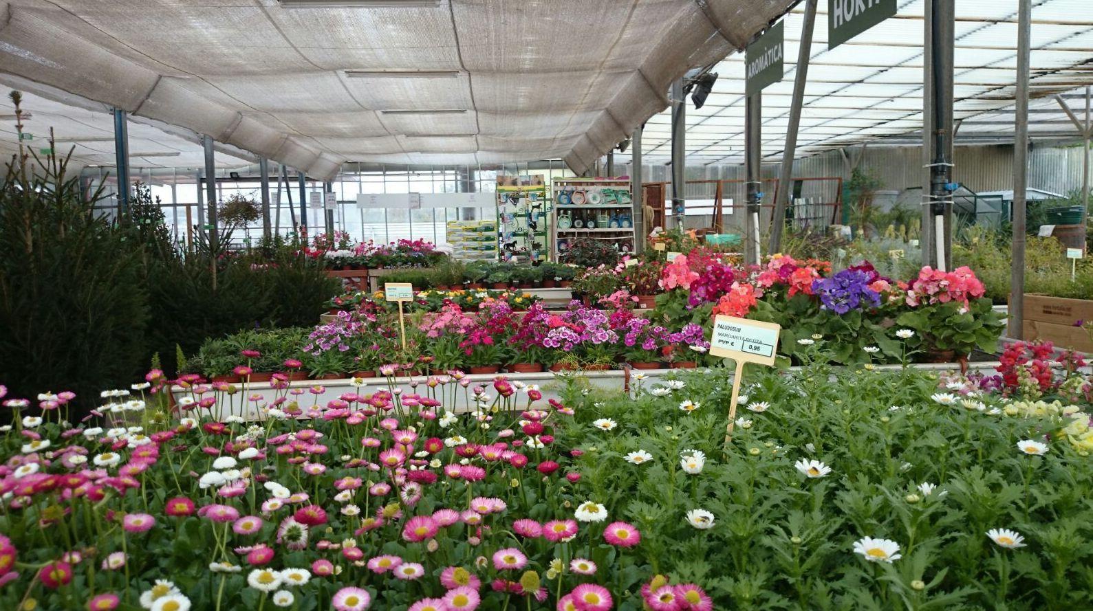 Foto 13 de Excelente surtido en productos para todo tipo de jardines en Castelló d'Empúries | Mercajardí