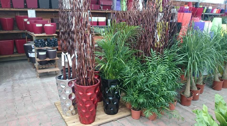 Plantas y maceteros en Girona