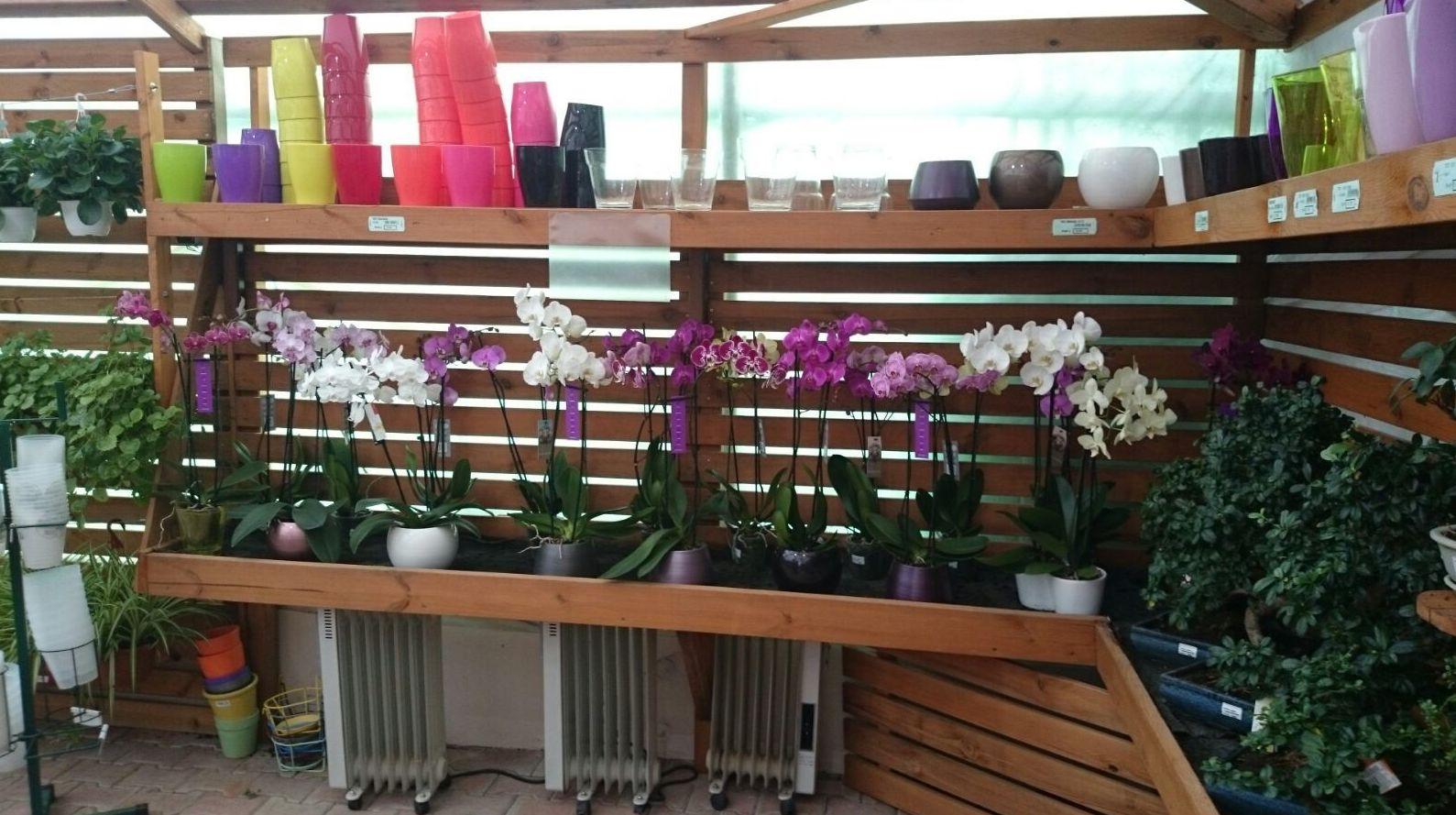 Foto 11 de Excelente surtido en productos para todo tipo de jardines en Castelló d'Empúries | Mercajardí