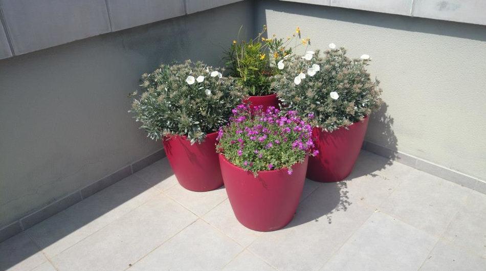 Plantas de exterior en Girona