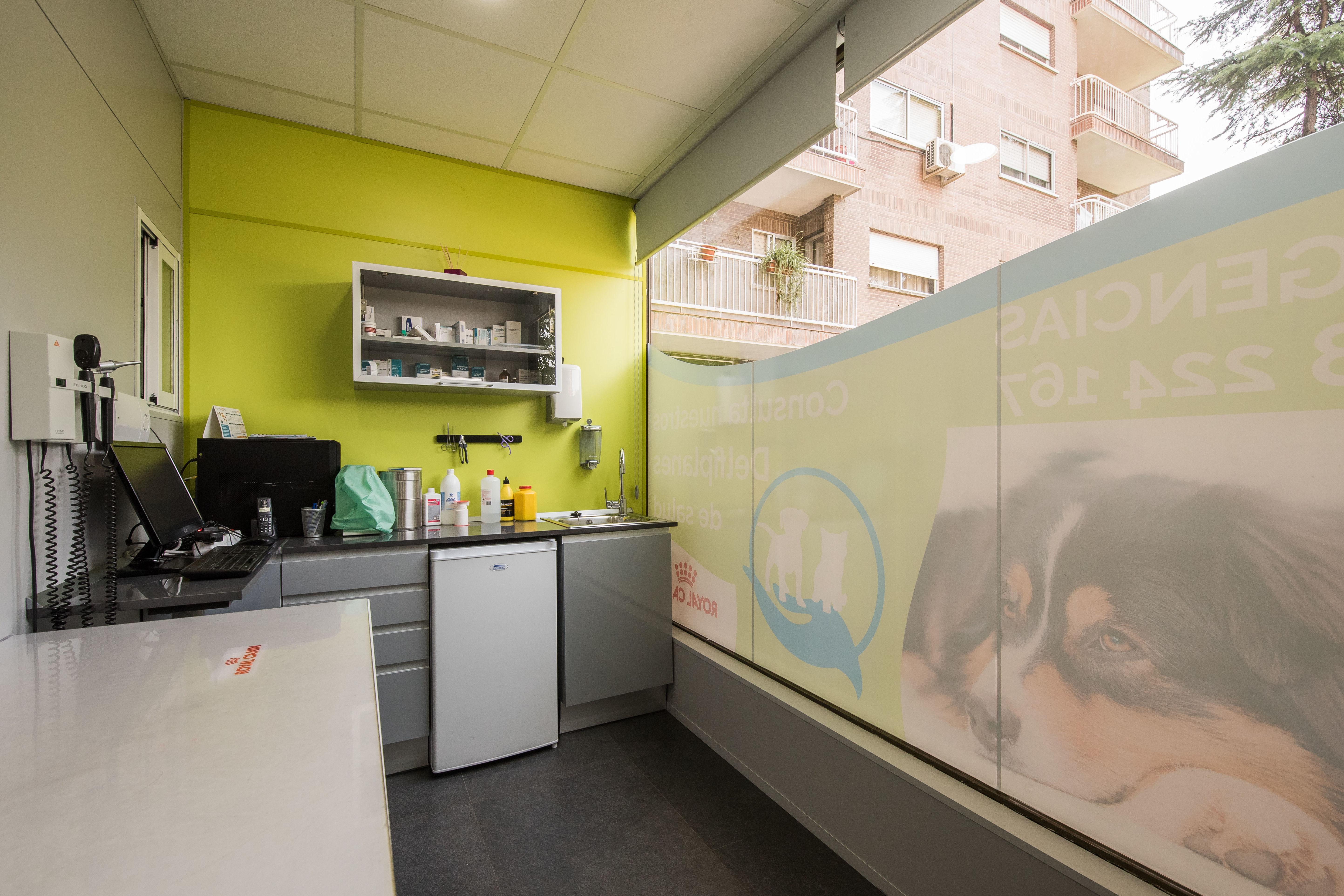 Foto 7 de Veterinarios en Coslada | Centro Veterinario Delfines