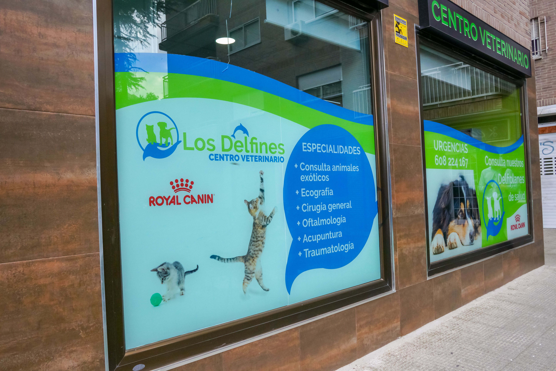 Foto 3 de Veterinarios en Coslada | Centro Veterinario Delfines