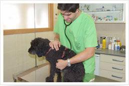 Consulta general: Servicios de Centro Veterinario Delfines