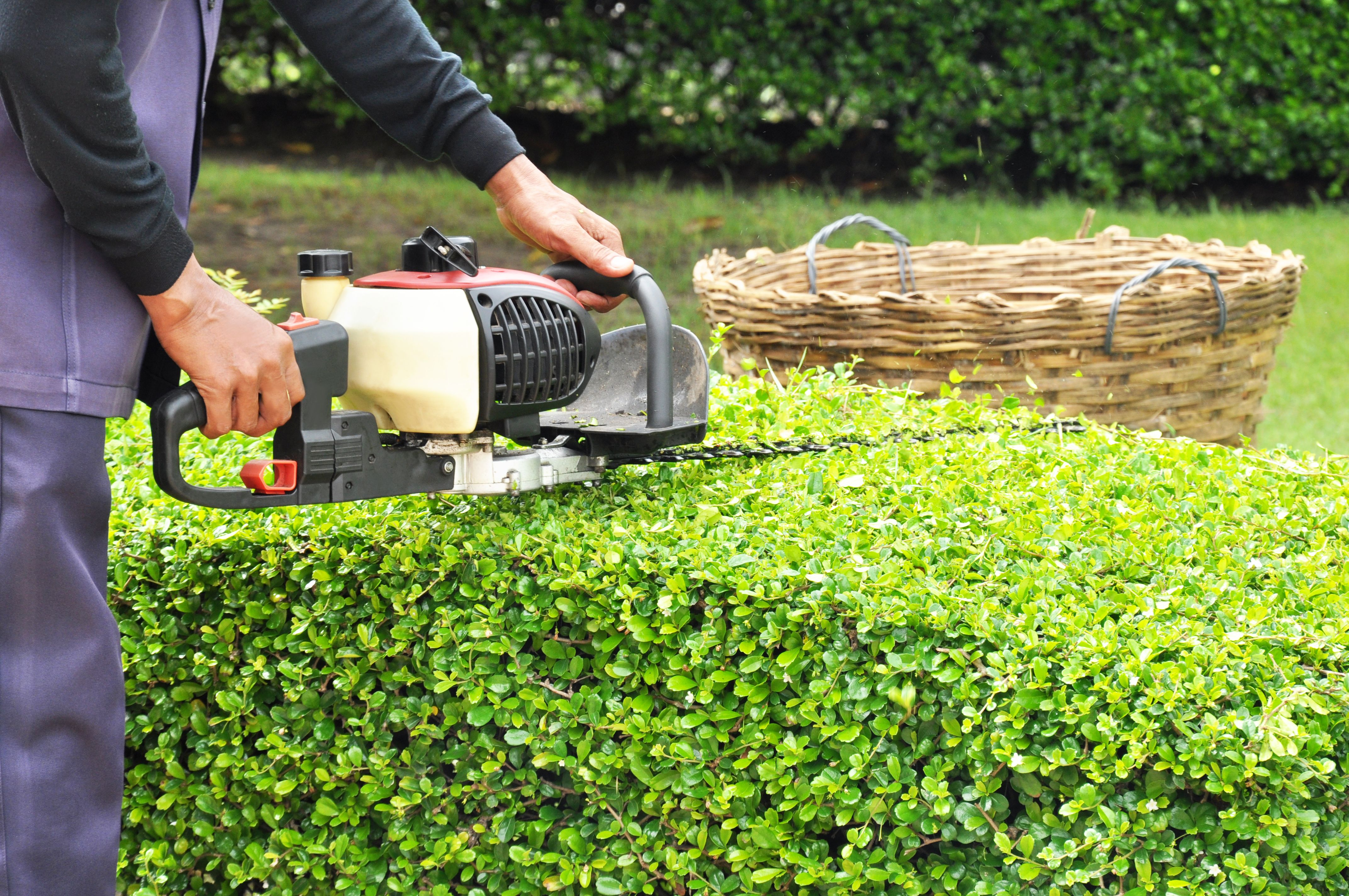 Somos expertos en el mantenimiento de jardines