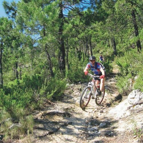 Venta de bicicletas mountain bike en Valdepeñas