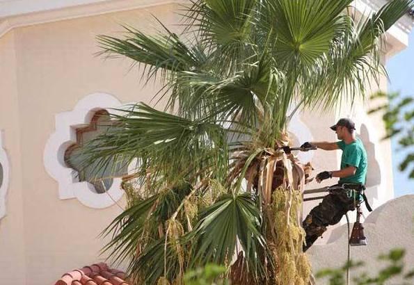 Curso de poda de palmeras