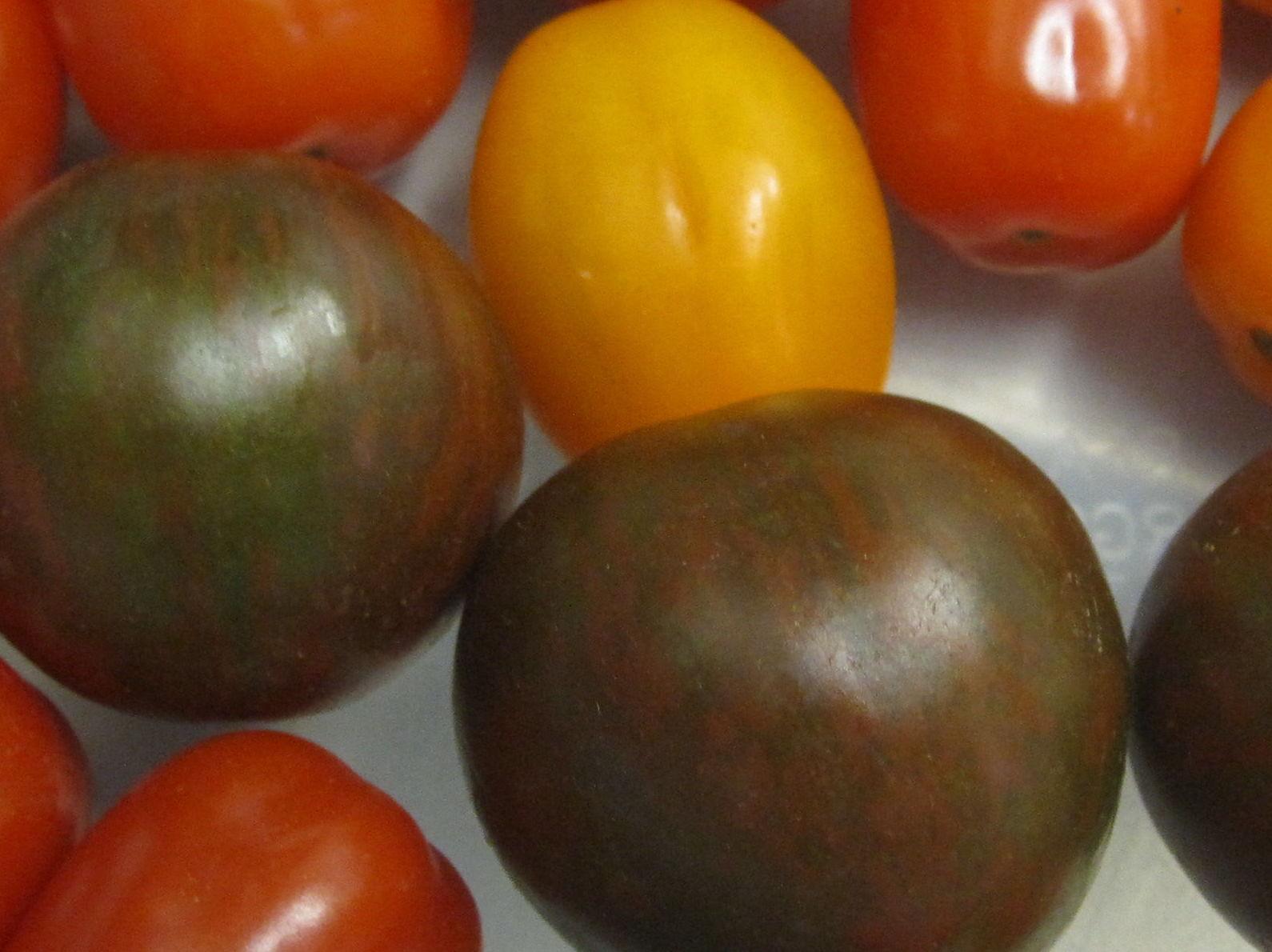 Variedad de tomatitos.
