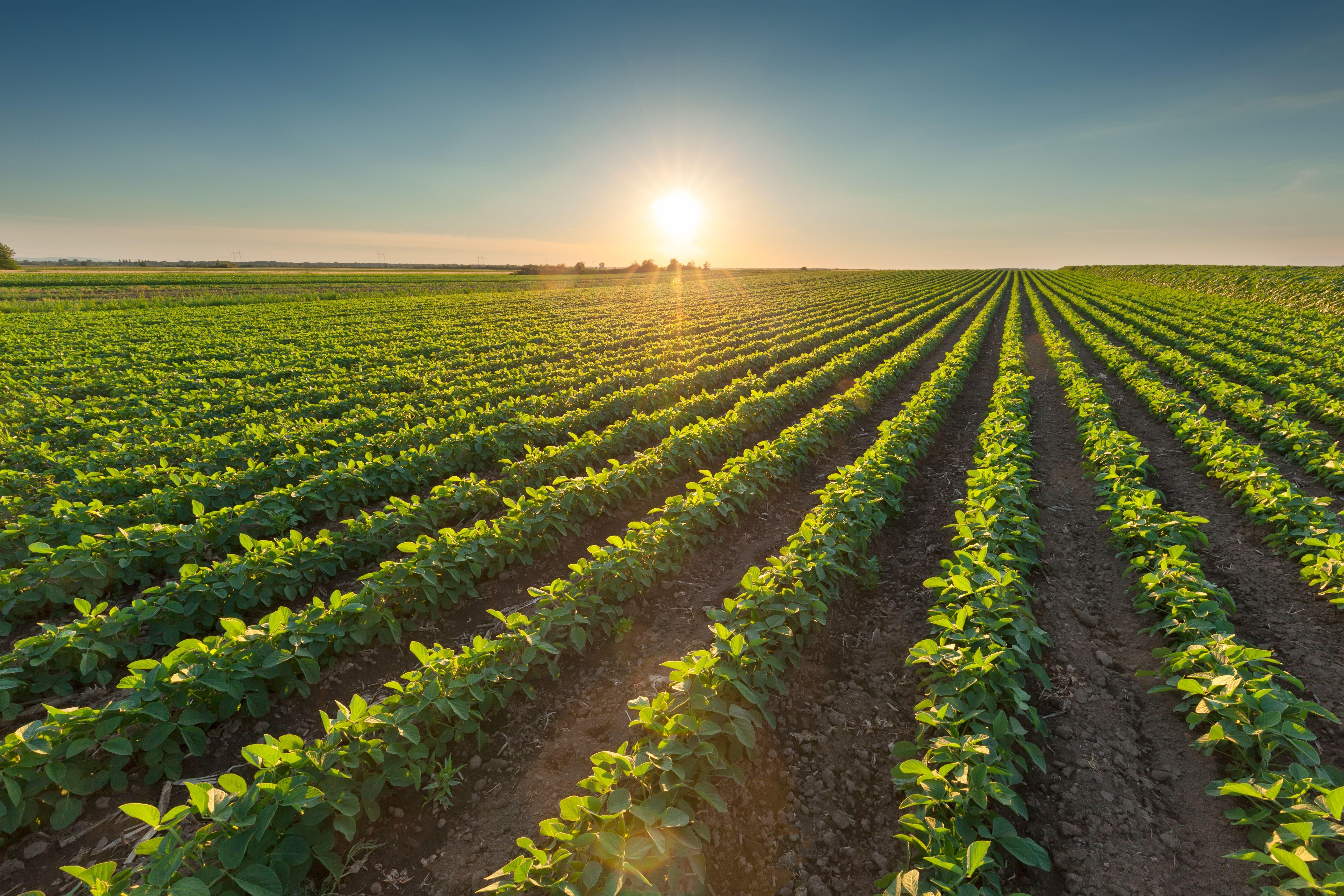 Distribución de semillas y Agroquimicos Ciudad Real