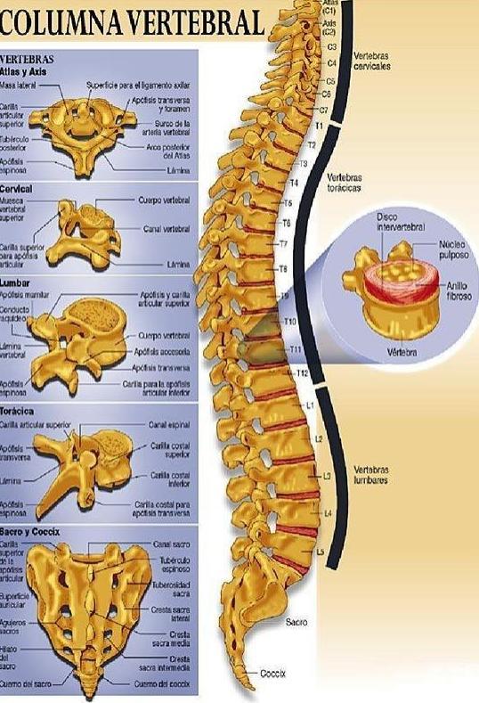 Clinica de la espalda Valencia|Stude sport centro médico