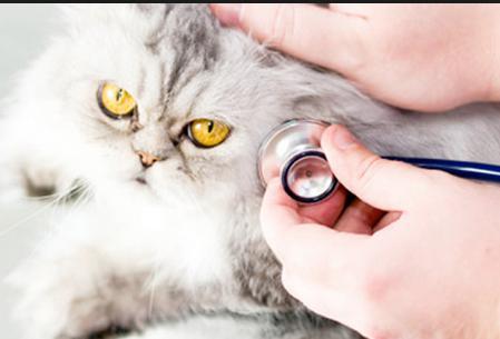 CONSULTA DE MEDICINA GENERAL: Servicios de Clínics Veterinària