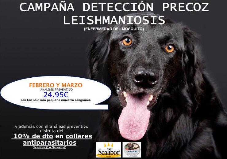 CAMPAÑA DETECCIÓN PRECOZ LEISHMANIOSIS FEBRERO Y MARZO
