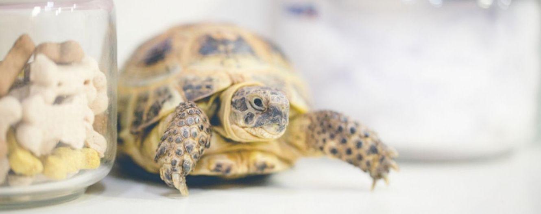 Veterinarios para animales exóticos en Mollet del Vallès, Barcelona