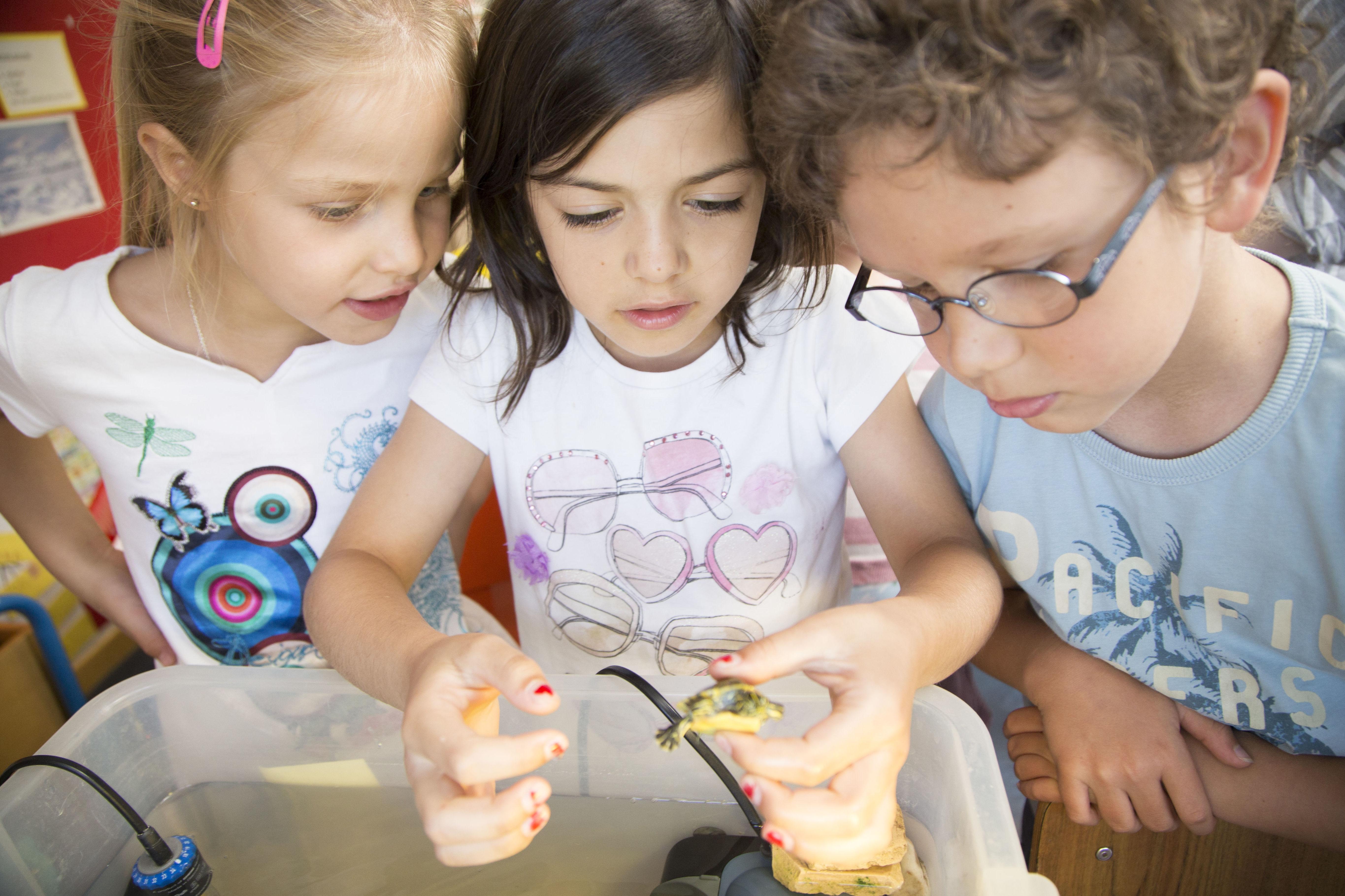 Estudiantes de educación infantil mirando una tortuga