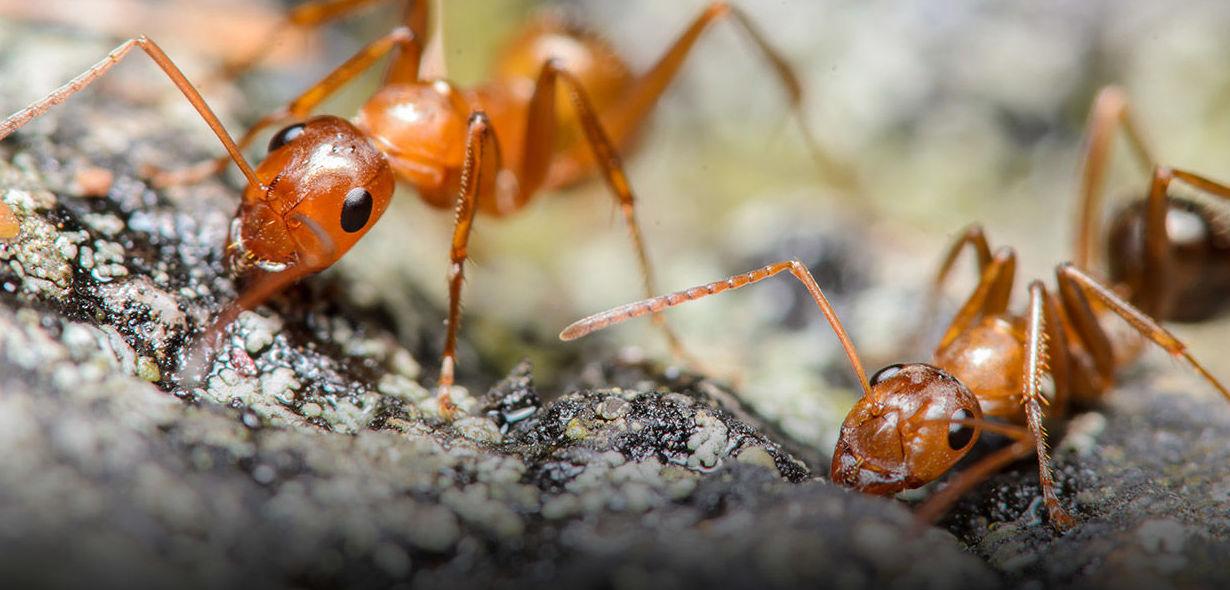 Tratamiento contra hormigas en Cádiz