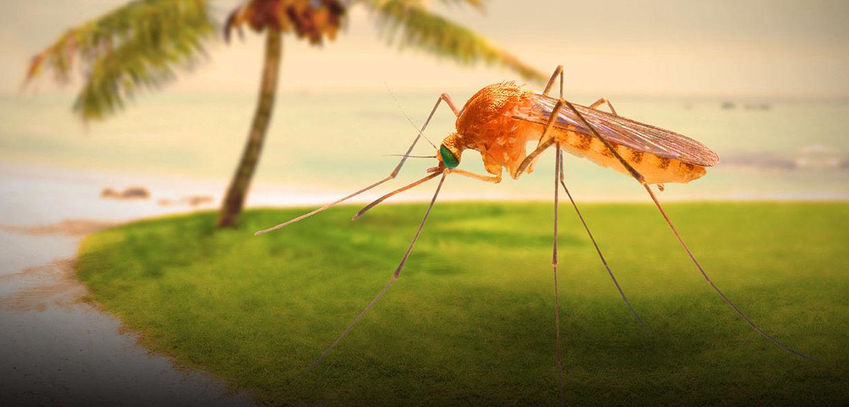 Tratamientos contra mosquitos