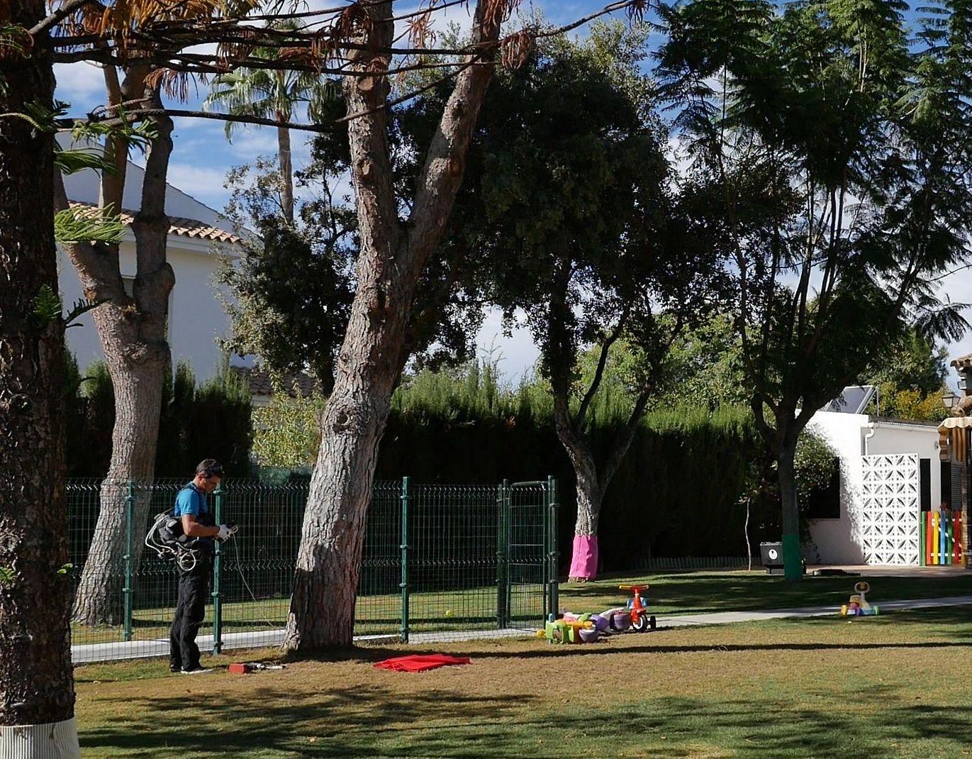 Eliminación de plagas en árboles
