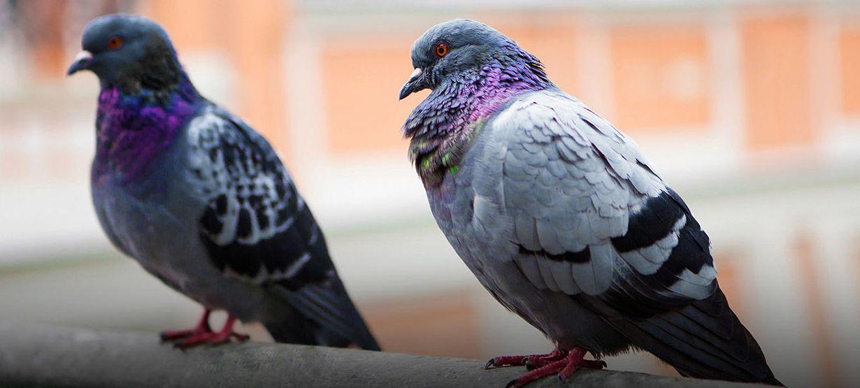 Sistemas de control de aves en Cádiz
