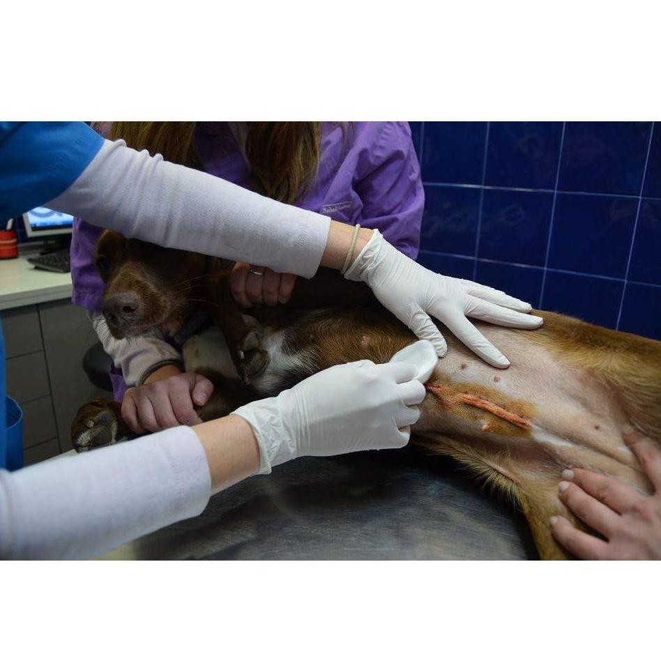Cirugía: Especialidades de Clínica Veterinaria Reus