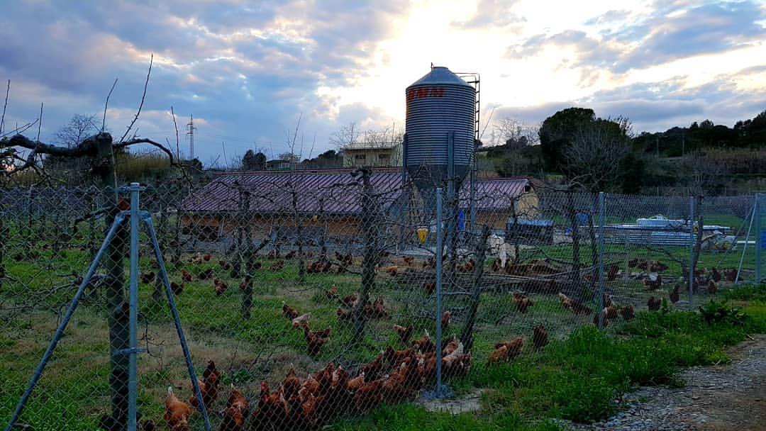 Producción de huevos ecológicos en Martorell, Barcelona