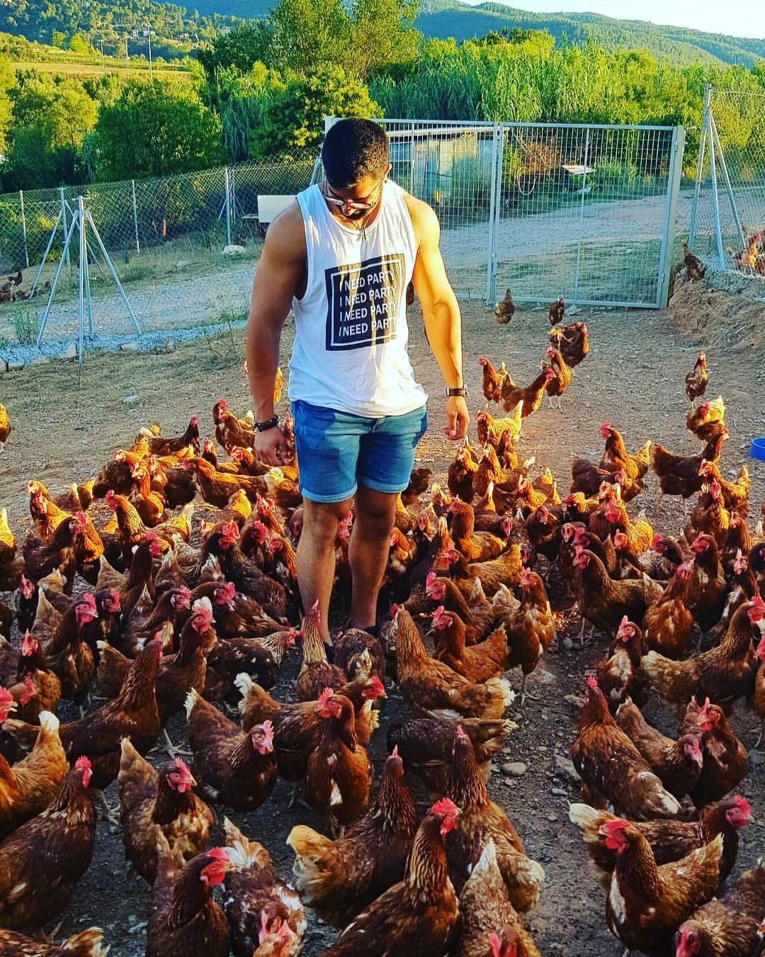 Granja de gallinas ecológicas en Martorell, Barcelona