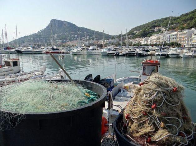 Pescados y mariscos fresco de nuestras aguas