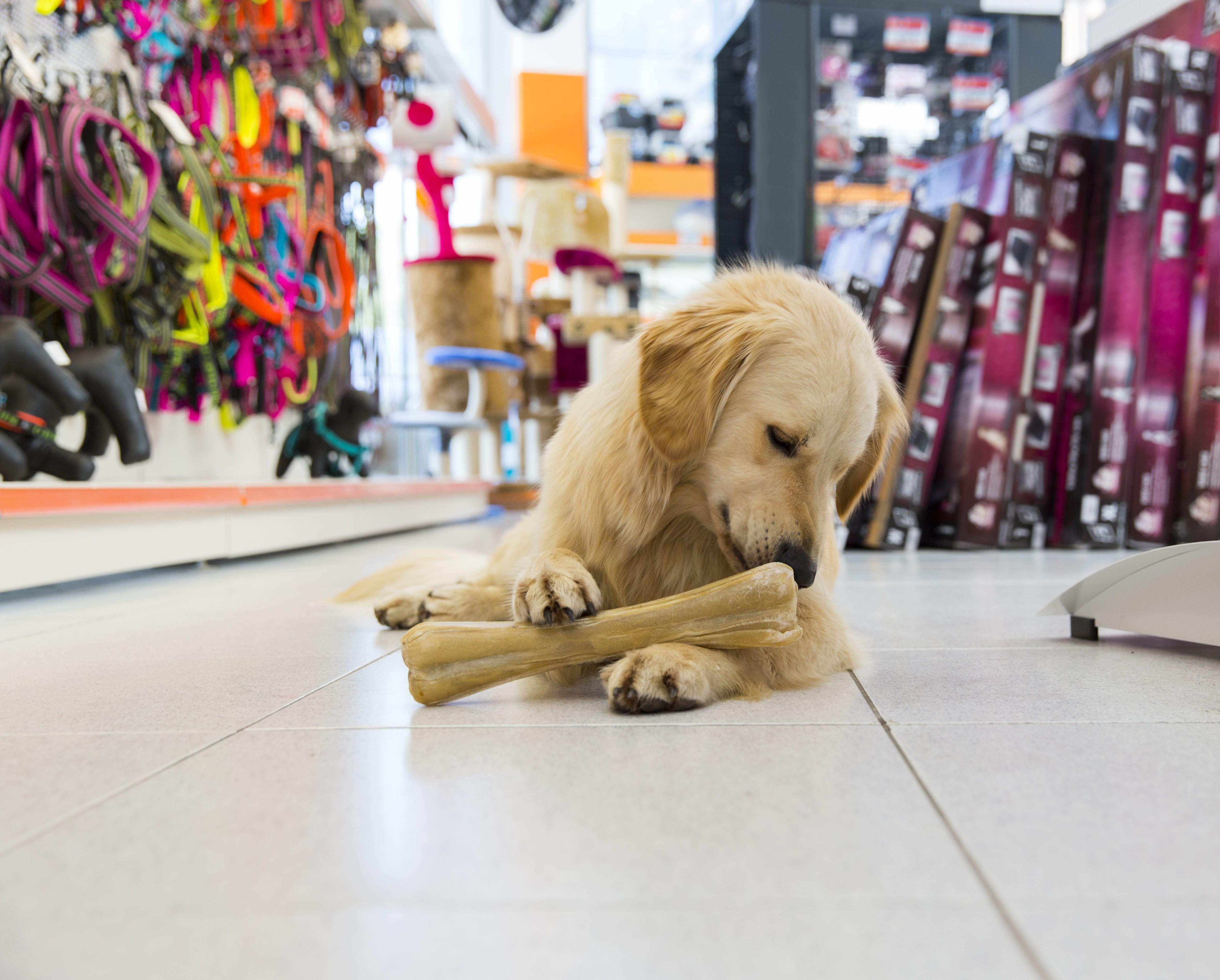 Venta de accesorios y alimentos para mascotas en León