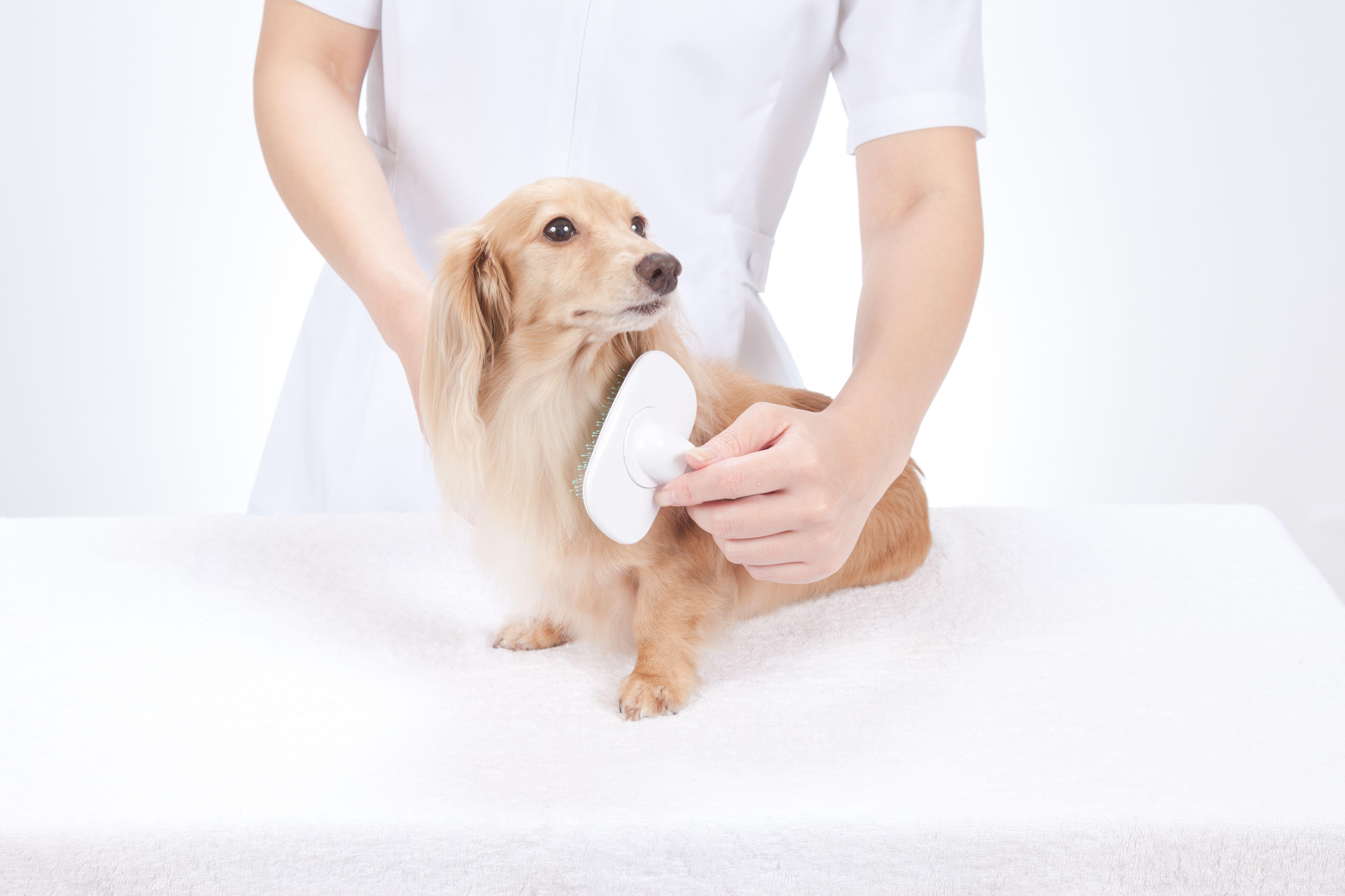 Peluquería para perros en León