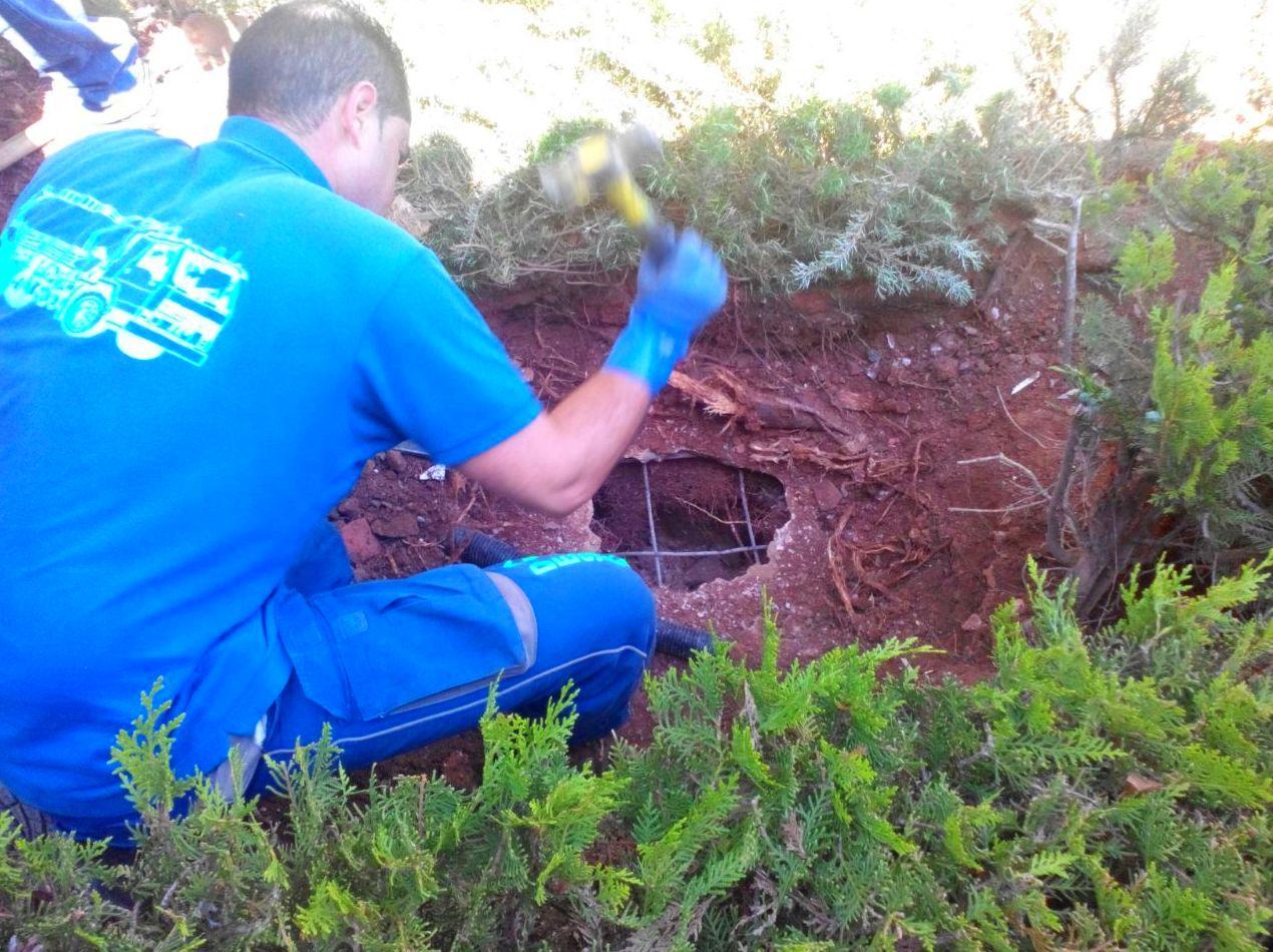 Atasco de tuberias provocado por las raíces de los árboles