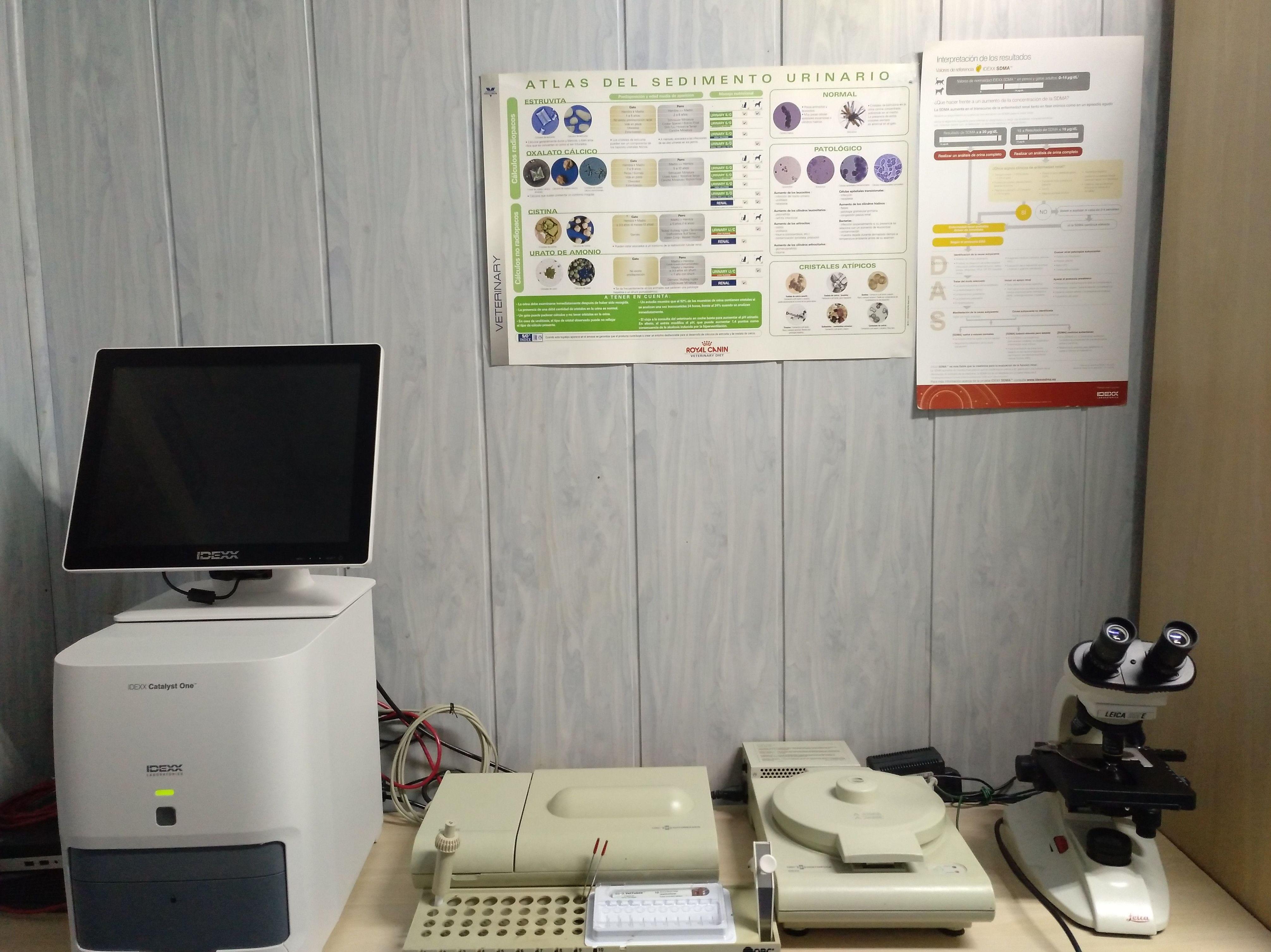 Foto 27 de Veterinarios en Alcorcón | Veterinario Alcorcón