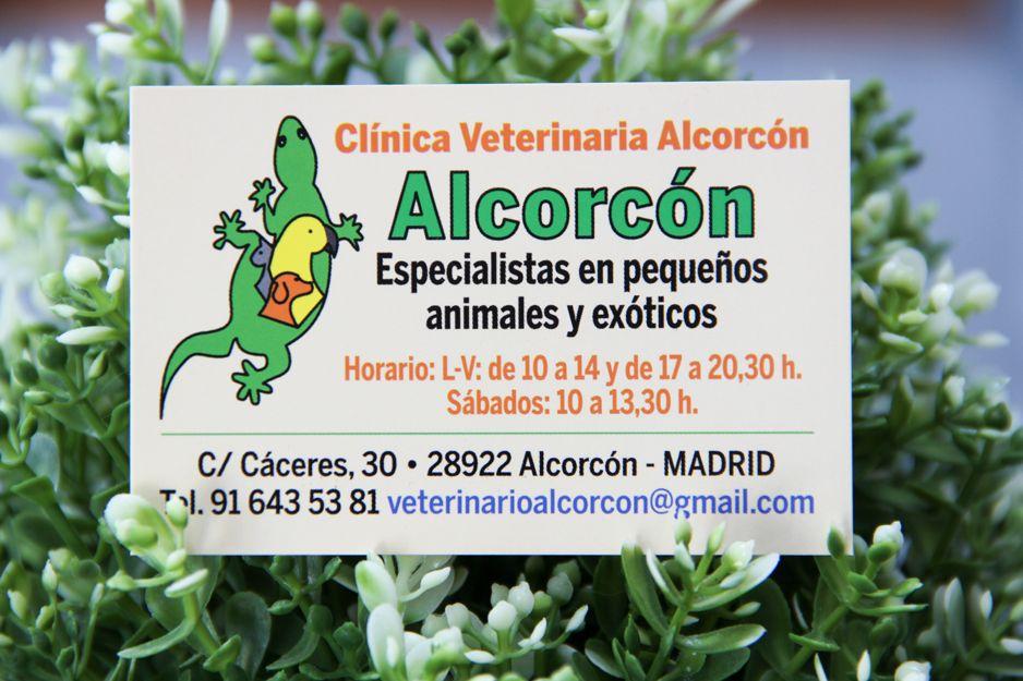 Clínica veterinaria en Alcorcón