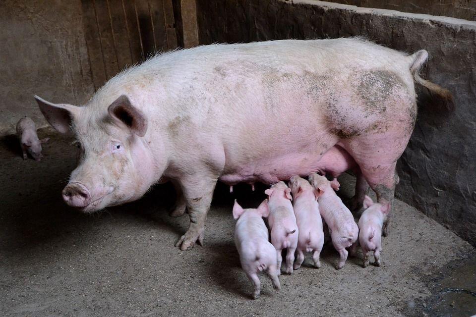 Mantenimiento de granjas porcinas: Servicios de Ferretería Elías